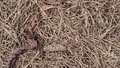 Dry grass texture Royalty Free Stock Photo