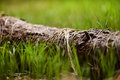 Dry grass on a tree trunk Royalty Free Stock Photo