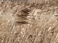 Dry grass and wind detail of in the field Stock Photos