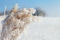 Dry grass in winter hoarfrost on time Royalty Free Stock Photography