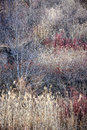 Dry grasses and bare trees in winter forest natural background of brown woodland with subdued colors Stock Image