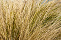 Dry grasses in nevada desert Stock Photos
