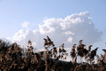 Dry grasses in winter and blue sky with clouds Royalty Free Stock Image