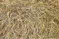 Dry hay dried in a haystack closeup as background Stock Image