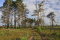 Dry heathland with fire damaged scots pines thursley common nnr surrey Stock Photography
