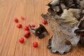 Dry Horn of plenty mushroom Royalty Free Stock Photo