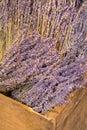Dry lavender blossoms