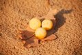 Dry leaf with abstract yellow balls on sand Stock Images