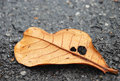 Dry leaf on asphalt detail vintage photo of Stock Photo