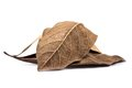 Dry leaf fallen leaves on white background Stock Images