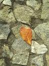 A dry leaf fallen on the rocks wall