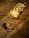 Dry leaf golden on wooden background Royalty Free Stock Photography