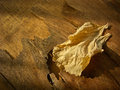Dry leaf golden on wooden background Stock Images