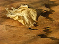 Dry leaf golden on wooden background Royalty Free Stock Image