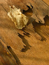 Dry leaf golden on wooden background Stock Photos