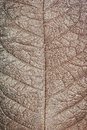 Dry leaf texture background Royalty Free Stock Photo