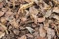 Dry leafs of trees lying in field