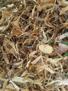 Dry leaves brown Stock Image