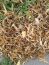Dry leaves brown Royalty Free Stock Photos