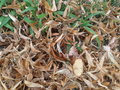 Dry leaves brown Royalty Free Stock Photo