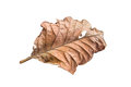 Dry leaves isolated on white background Stock Photo