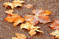 Dry leaves on a road Royalty Free Stock Photos