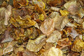 Dry leaves on the road fallen a nuisance and danger roads Royalty Free Stock Photos