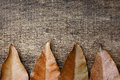 Dry leaves under the old cracked wooden background Royalty Free Stock Photo