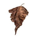 Dry leaves on white background Royalty Free Stock Photos