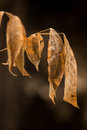 The dry leaves after wildfire in summer Stock Photography