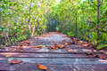 Dry leaves on a wooden walkway at nature trail mangrove forest Stock Images