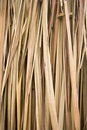 Dry palm leaves Stock Image