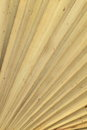 Dry palm leaves texture of for background Stock Photography
