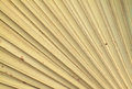 Dry palm leaves texture of for background Stock Image