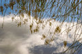 Dry pampas grass branches reflected in water swaying the wind Stock Photography