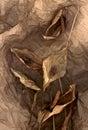 Dry petals of Calla Royalty Free Stock Photo