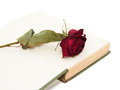 Dry red rose on the open old book. Royalty Free Stock Photo