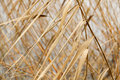 Dry reeds pattern abstract seasonal autumn background plant reed bush closeup forming a geometric with blurred water as a backdrop Royalty Free Stock Photos