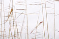 Dry reeds silhouettes pattern abstract seasonal autumn background plant reed bush closeup forming a geometric with and blurred Royalty Free Stock Photography
