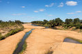 Dry river bed in kruger national park broad with small trickle of water and animal tracks crossing to pools south africa Royalty Free Stock Images