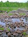 Dry riverbed of vyg river in zalavruga karelia Royalty Free Stock Image