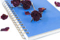 Dry rose on blue book on white background. Royalty Free Stock Photo
