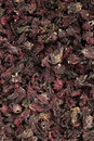 Dry roselle Stock Photo