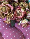 Dry roses beautiful vintage background on pink Royalty Free Stock Photo