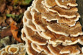 Dry rot fungus Stock Photo