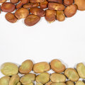 Dry seeds of broad bean of different colors Royalty Free Stock Photo