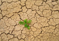 Dry soil texture background Stock Photos