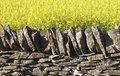 Dry stone wall field of oil seed rape Royalty Free Stock Photography