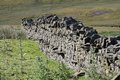 Dry stone wall Yorkshire Dales heather on hillside Royalty Free Stock Photo