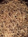 Dry straw